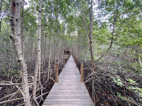 study center mangrove
